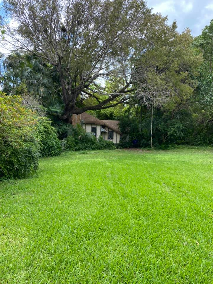 Grass, Tree & House - The River Grass