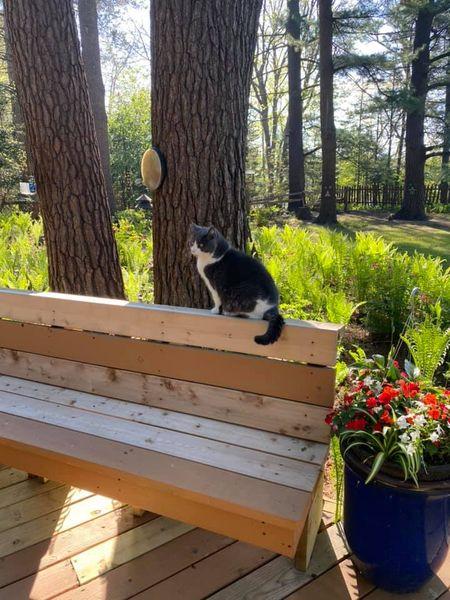 Simon the cat surveys
